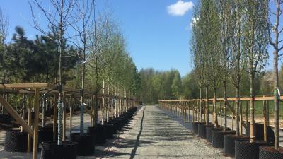 50 nya träd väntar i Skåne Tranås